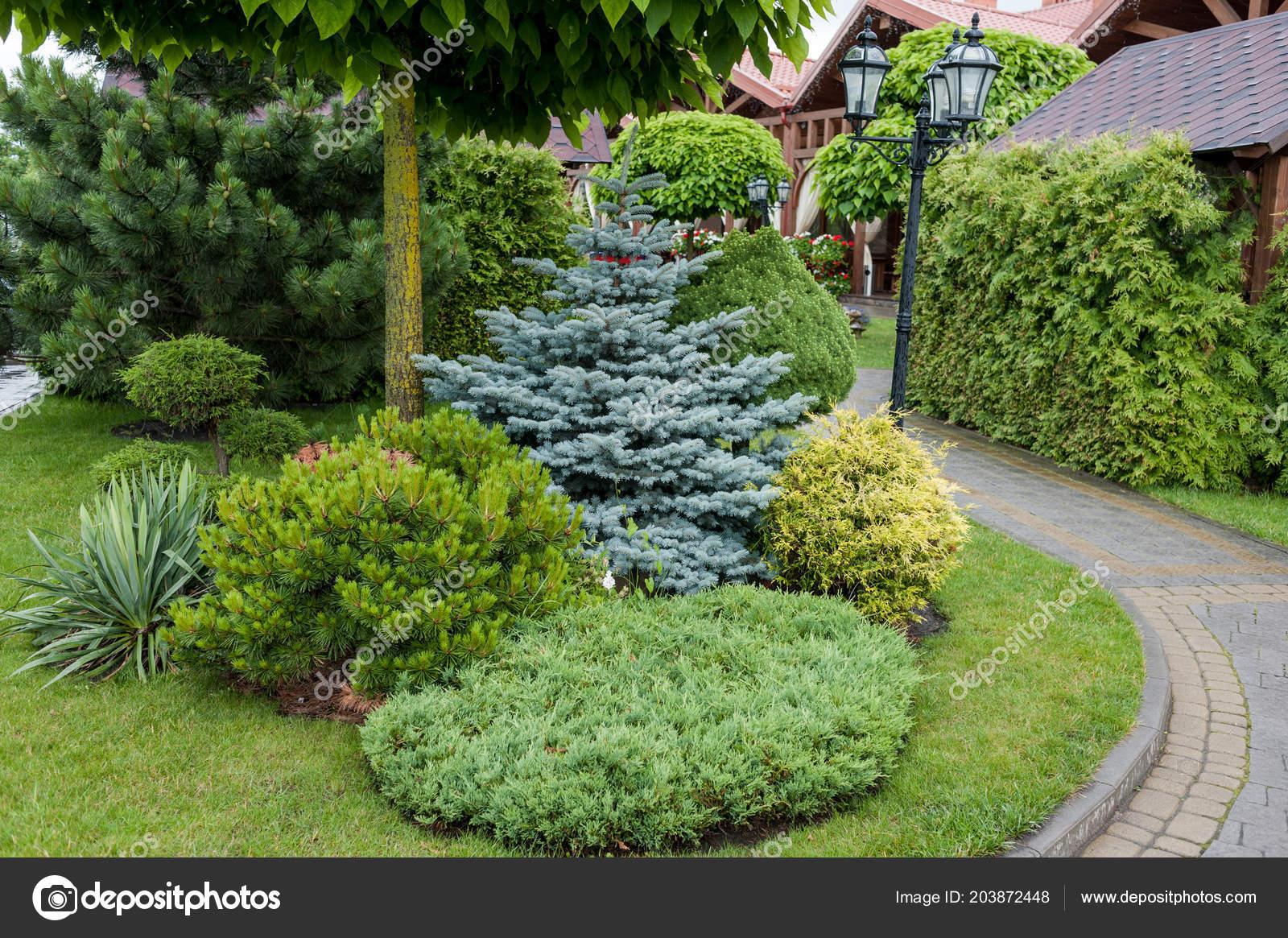 Kleine Gärten Und Einzigartigen Pflanzen Landschaftsgestaltung