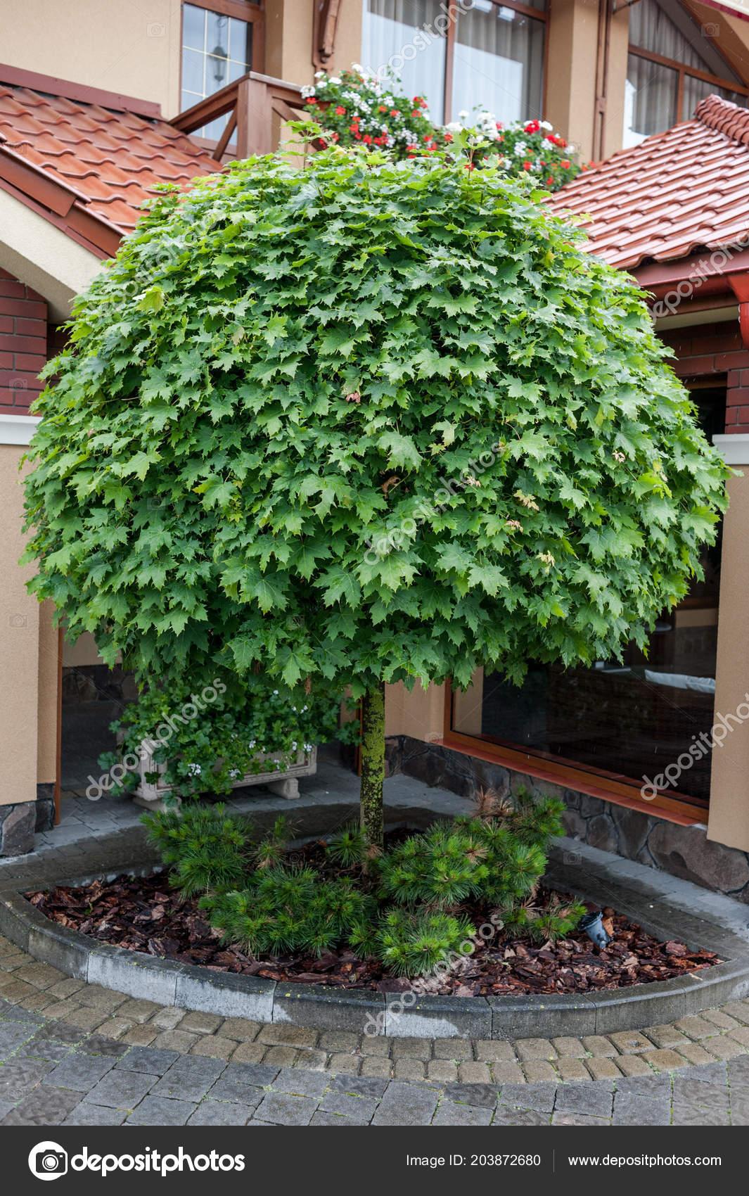 Jardines peque os plantas nicas dise o del paisaje foto for Jardines hermosos pequenos