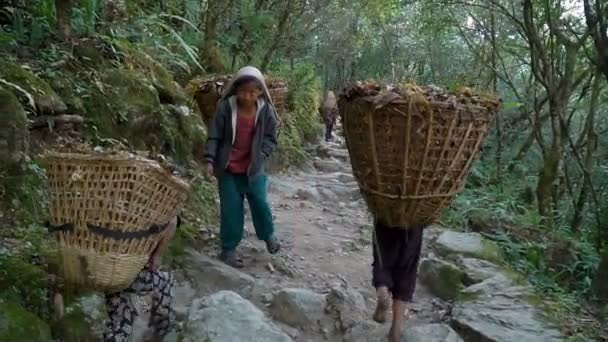 Children work as porters in Nepal