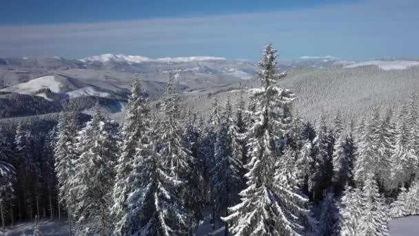 Létání nad les a hory v zimě