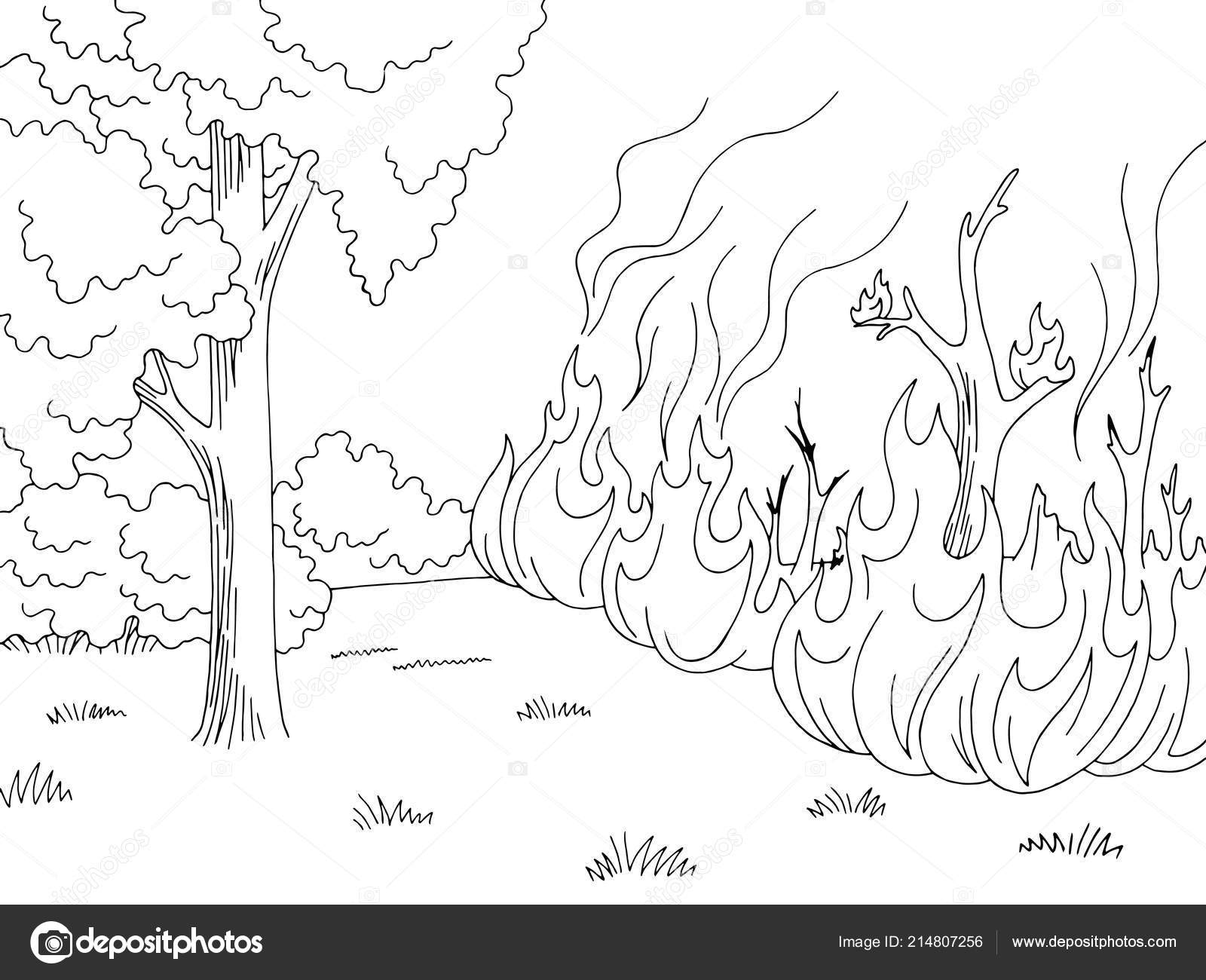 Bosque Blanco Negro Gráfico Wildfire Fuego Vector