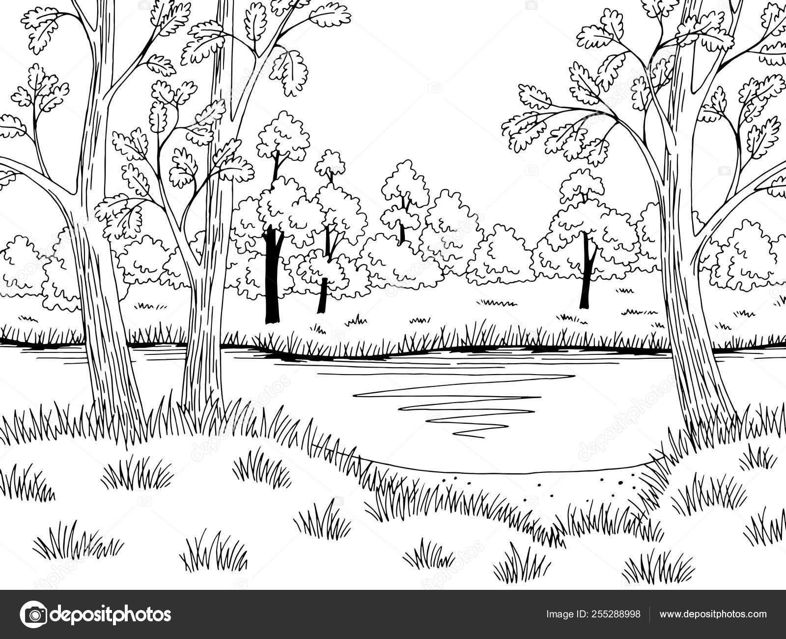 Floresta Lago Gráfico Preto Branca Paisagem Desenho