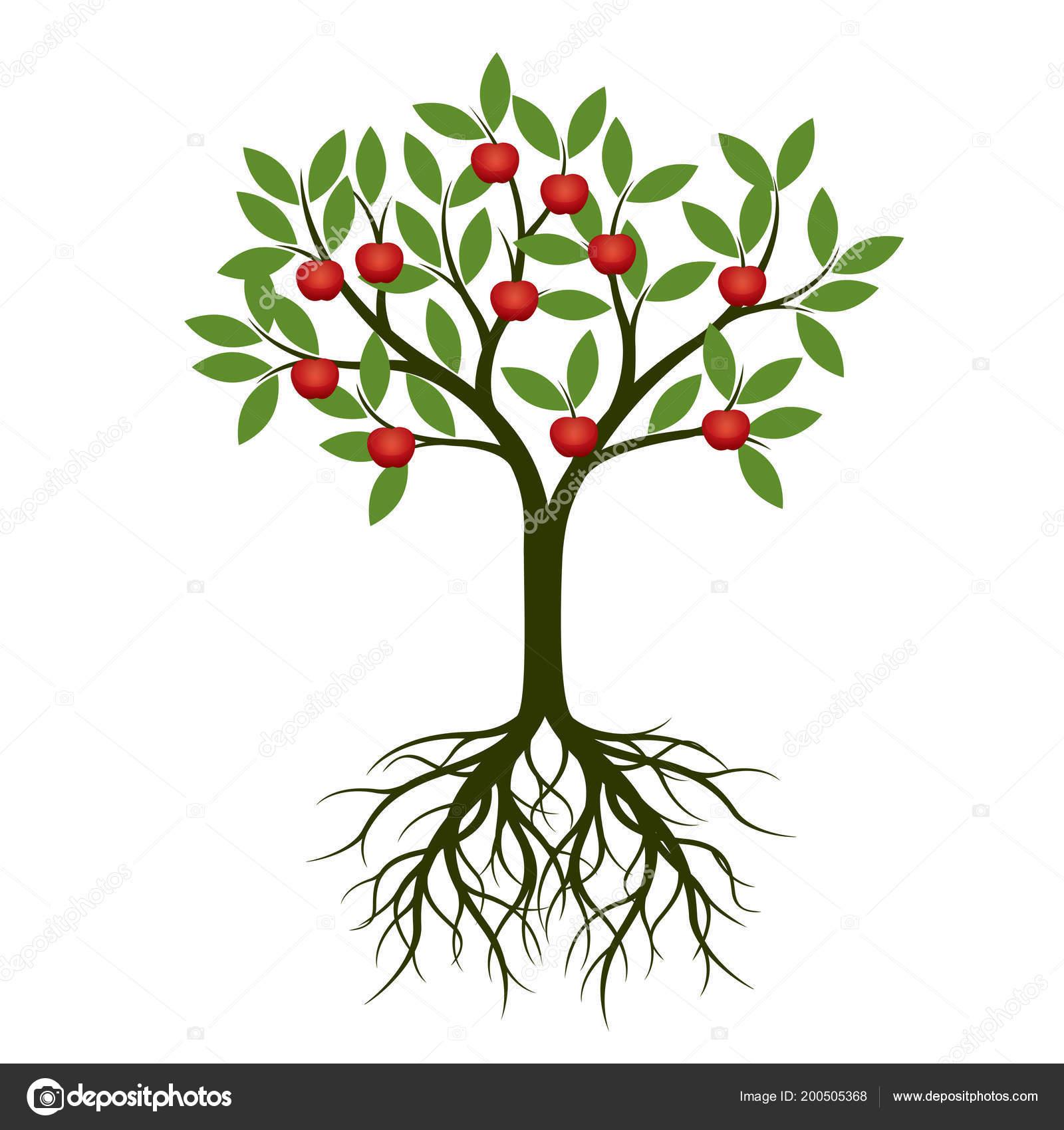 verde Árbol con raíz frutas manzana roja ilustración vector planta