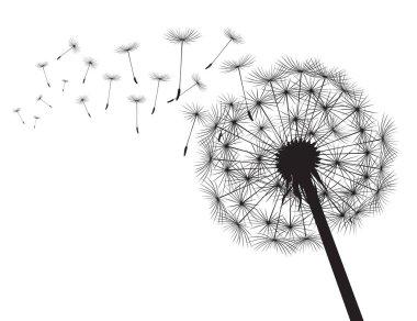 Black silhouette Dandelions and white background. Vector Illustration.