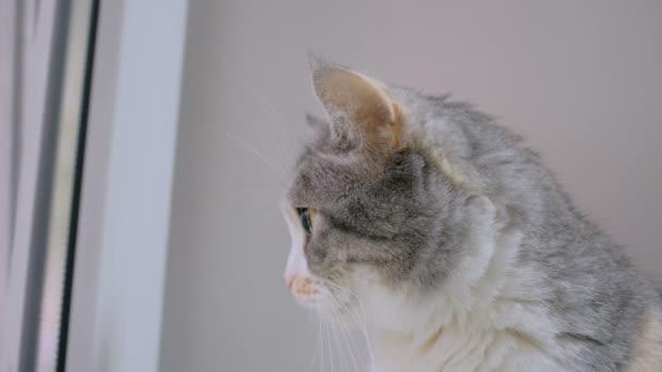 Kočka sedí na parapetu