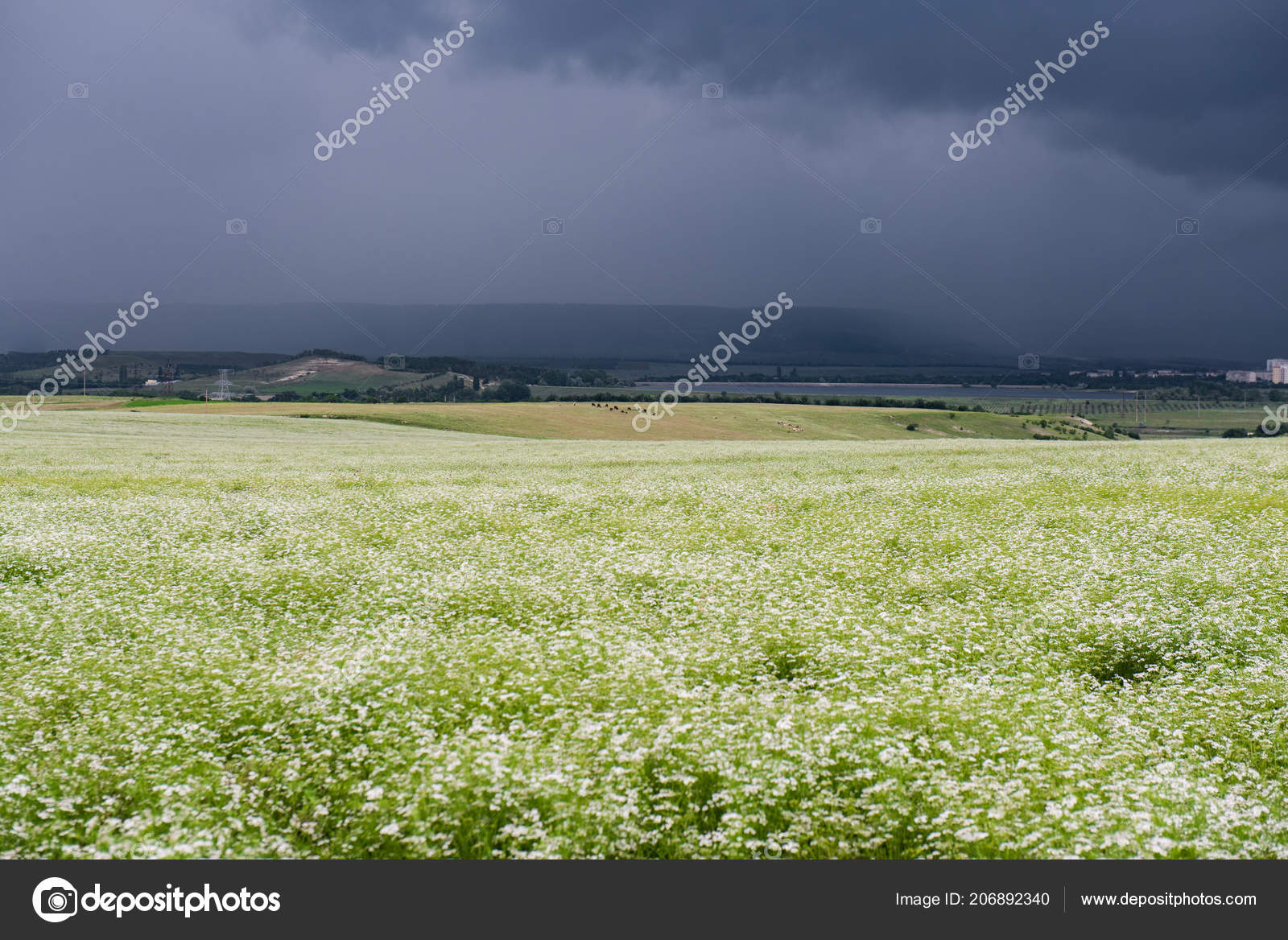 Field Of White Flowers With Storm Clouds Above In Horizontal