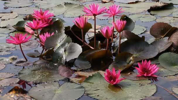 Lotus - buddhizmus szent virága