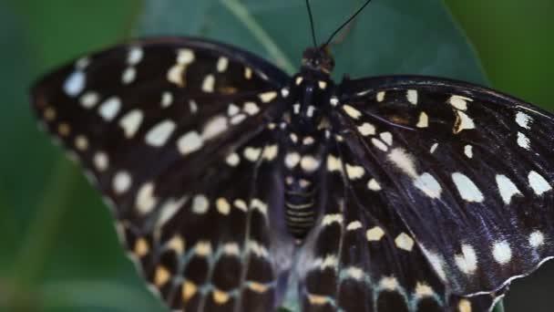 Trópusi pillangó-közelről