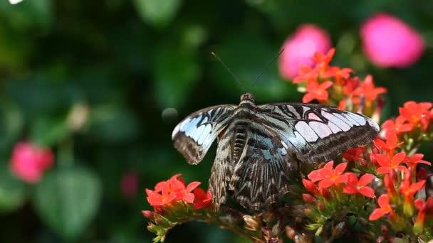 Exotický motýl detail v tropické zahradě