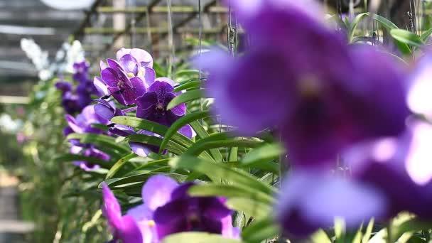 Květ orchideje close-up scény s rozostřený záběry