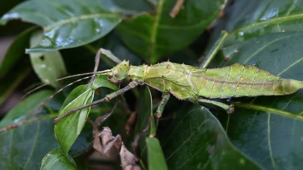 Exotic tropical insects in the terrarium of Thailand. Insects of Asia
