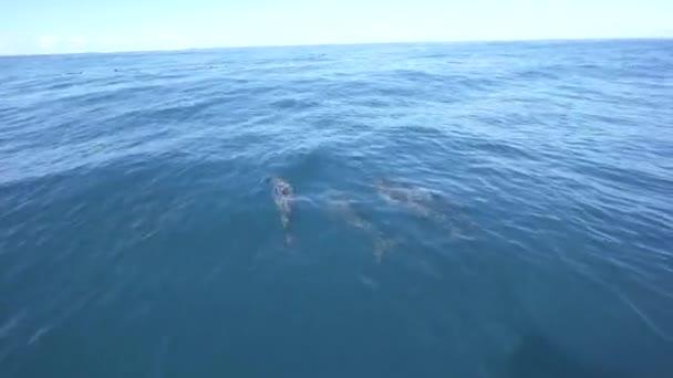Pod delfínů dlouholebých hrát na povrchu oceánu poblíž lodi