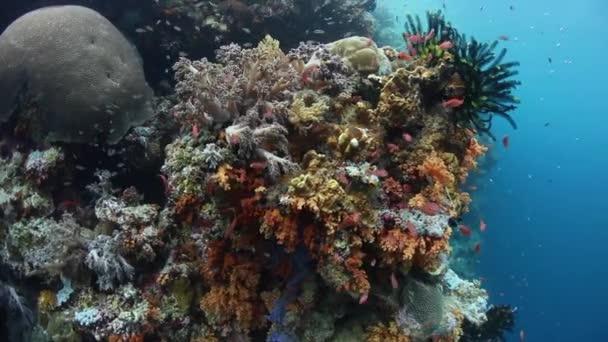 Barevné ryby a korály se daří na útesu v národním parku Wakatobi v Indonésii. Tato oblast chová extrémně vysoké biologické rozmanitosti moří a je oblíbenou destinací pro potápění a šnorchlování.