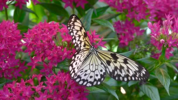 Pillangó és a trópusi virág