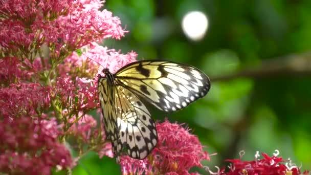 Zpomalený záběr motýl na květu