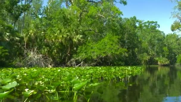 Řeka teče přes deštný prales v džungli