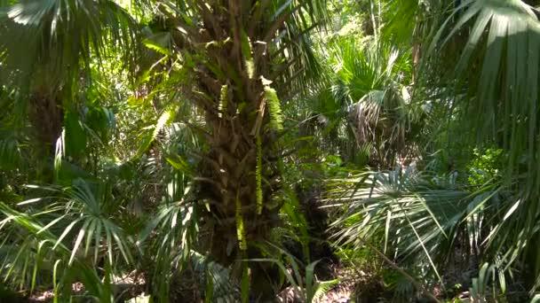svěží zeleň v tropické džungli