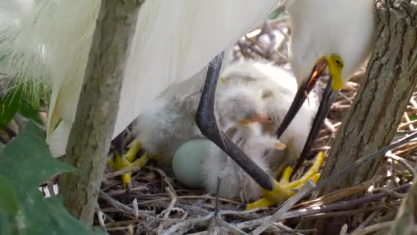 Nest with chicks close-up.