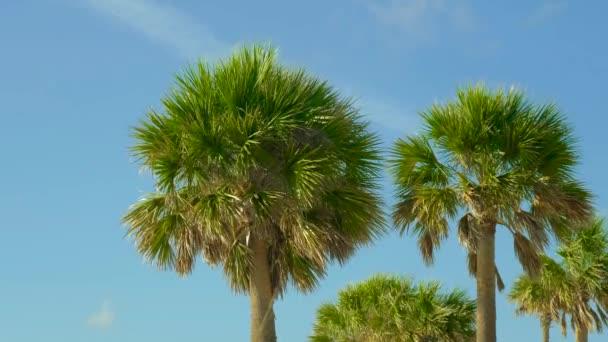 Palmové stromy proti modré obloze. Palmy na Santa Monica beach. Pohled na pěkné tropické pozadí s kokosovými palmami. Vrcholky palem pozadí slunečné oblohy. Retro a vintage laděných