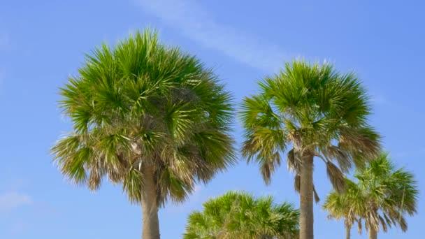 Zelené palmy na pozadí modré oblohy. Palmové stromy proti krásné modré oblohy. Pláž na tropickém ostrově. Pohled z palem proti obloze. Palmy, vlající ve větru
