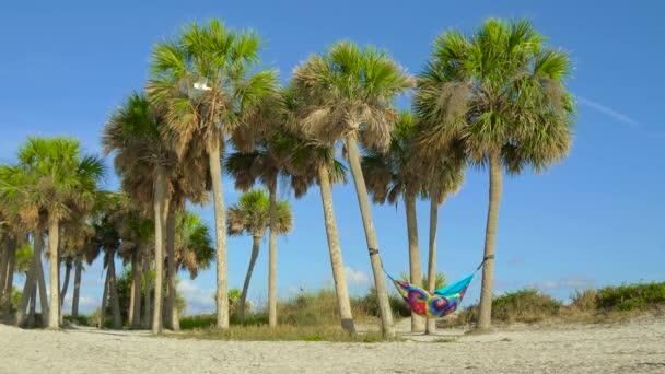 Függőágy, a szivárvány színei között a pálmafákkal szegélyezett strand lóg. Az emberek a nyaralás pihentető függőágy. Nézd a szép trópusi háttérben pálmafák. Gyönyörű trópusi Napospart