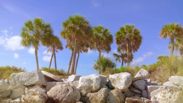 Palmy, vlající ve větru. Pohled na pěkné tropické pozadí s palmami. Palmy, vintage efekt. Pláž na tropickém ostrově. Pohled z palem proti obloze. Retro a vintage tón