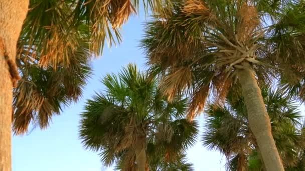 Kokosové stromečky zobrazení perspektiva. Zelené palmy na pozadí modré oblohy. Pohled z palem proti obloze. Pláž na tropickém ostrově. Palem na slunce světlo. Pohled zdola. Teplé světlo laděných