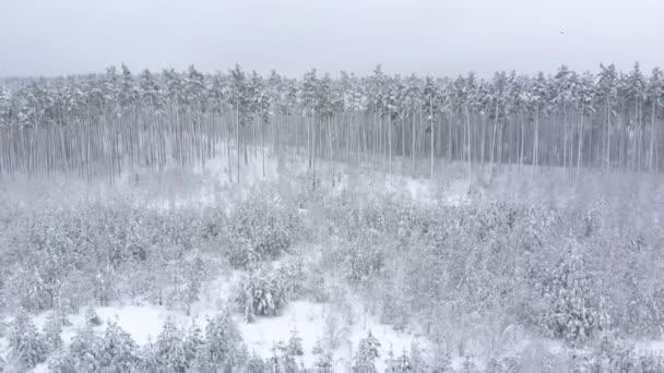 Letecký pohled na zimní pozadí s zasněženém lese