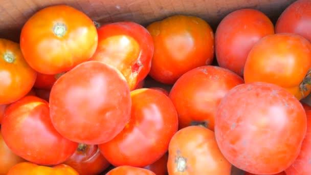 Velké chutné úrodu rajčat vydat ze zahrady, která leží v krabici detailní zobrazení