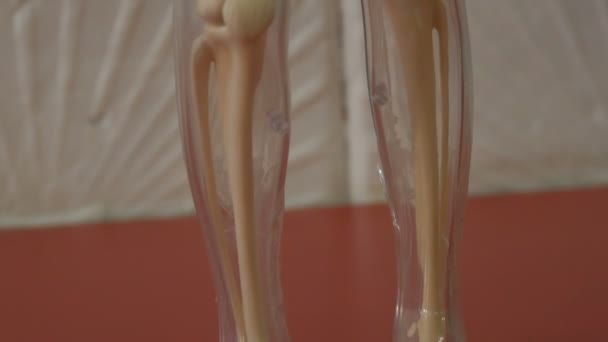 Toy model of the anatomical structure of the human body. Artificial mock-up of man