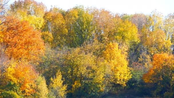 Malebná krajina barevné podzimní listí na stromech v lese v přírodě