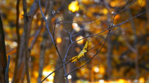 Branch with a fallen yellow leaf in the autumn forest