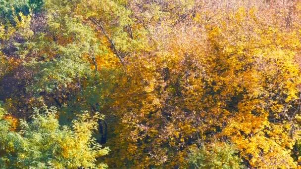 Festői táj színes őszi lombozat a fák az erdő a természetben