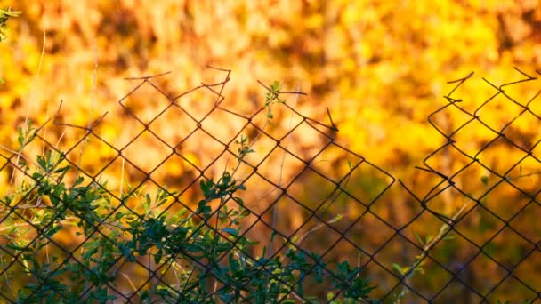Plombovací. Starý plot na pozadí žluté podzimní listí