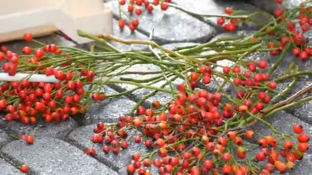 Mans hands take branches with red berries for a Christmas decoration of fir branches