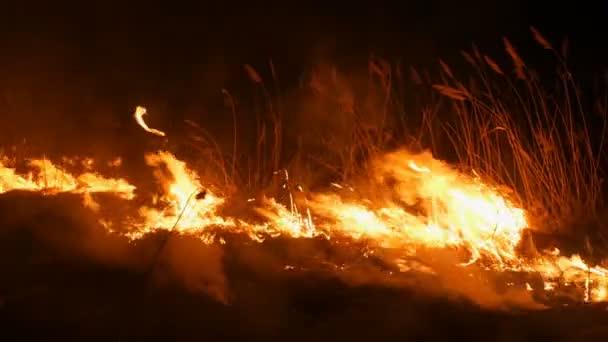 Strašný nebezpečný divoký oheň v noci na poli. Hoří suchá stébla trávy. Velká oblast přírody v plamenech.