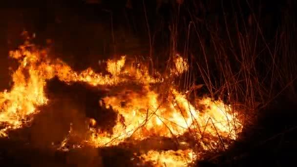 Nahaufnahme eines furchtbaren, gefährlichen Waldbrandes in der Nacht auf einem Feld. Verbrennung von trockenem Strohgras. ein großes Gebiet der Natur in Flammen.