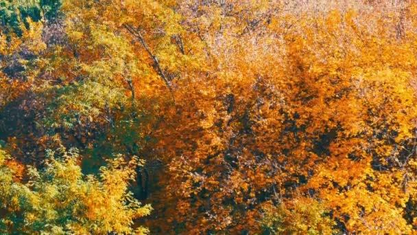 Fogliame di autunno variopinto paesaggio pittoresco su alberi in foresta in natura