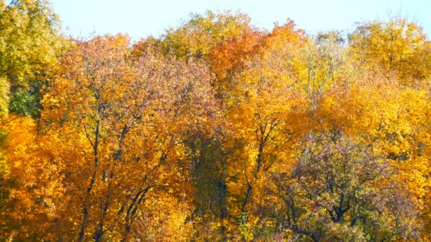 Picturesque landscape colorful autumn foliage on trees in forest in nature