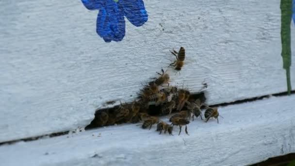 Méhek repülnek ki és repülni a fehér a méhkas. A méhek a nektárt mézre alakítják. Koncepció méz mezőgazdaság