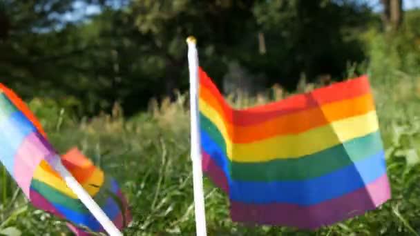 Regenbogenfahnen auf dem Rasenplatz, die sich im Wind wiegen, Symbol für schwul-lesbische Transgender-Queer-Rechte, Aktivismus liebt Gleichberechtigung und Freiheit