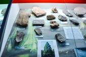 Geologické muzeum pojmenována Vernadskij, Moskva, Rusko - 11 června 2018: exponáty muzea pojmenovaná po Vernadskij v Moskvě, fosilní zbytky starých zvířat a rostlin.