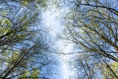 Skyview in a wood