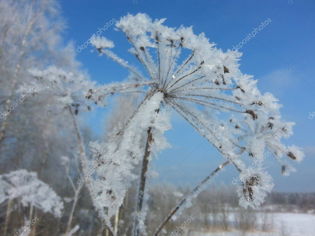 snowtopal
