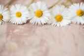 Fotografie Urlaub-Hintergrund. White Daisy Blumen Grenze auf grauem Beton Hintergrund. Textfreiraum, Ansicht von oben