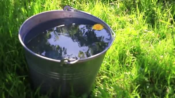 A wild daisy flower swims in a bucket of clear water standing in the grass. Reflection of the sun in the water.