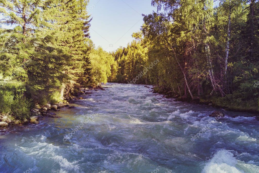 River, mountains and forests in Altai. The rapid flow of the river between the trees in the forest. Siberia. Russia. Solar bright tinting.