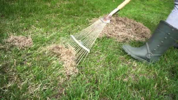 Chovatel očistit trávník od suché trávy s hráběmi v jarní zahradě. Koncepce zemědělství a zemědělství