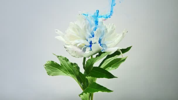On beautiful flowers pouring paint