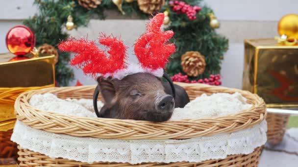 ein süßes Schwein mit weihnachtlichen Hirschhörnern liegt am Korb